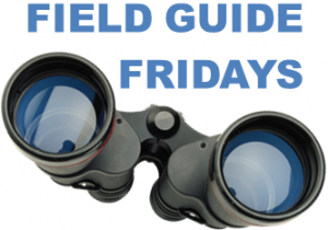 Field Guide Fridays - metrics and business models